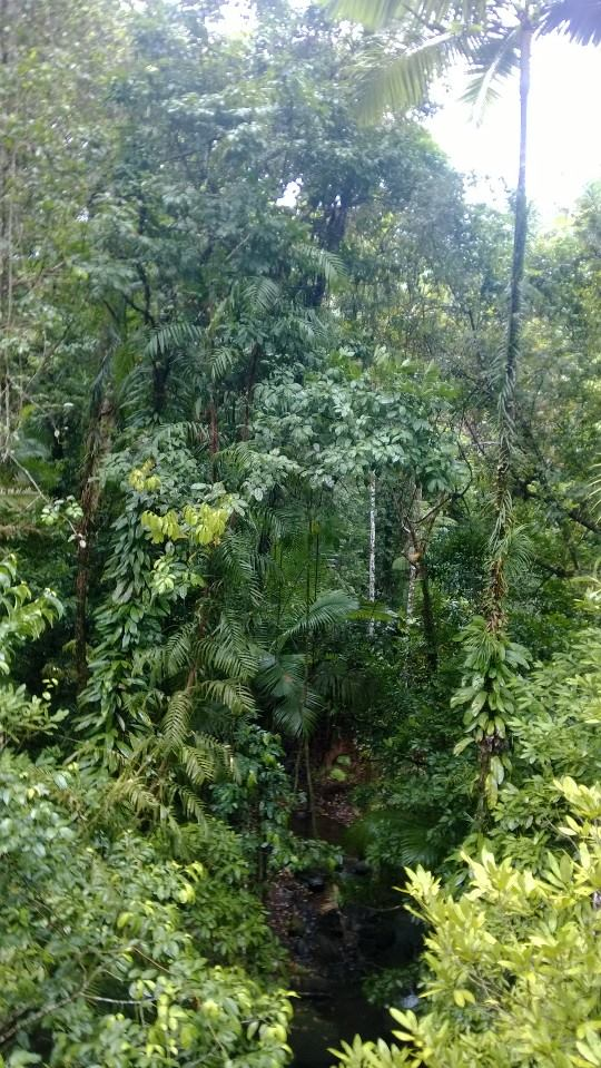 the_right_candidate_daintree_rainforest
