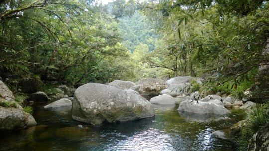 the_right_candidate_river_daintree_rainforest_mossman